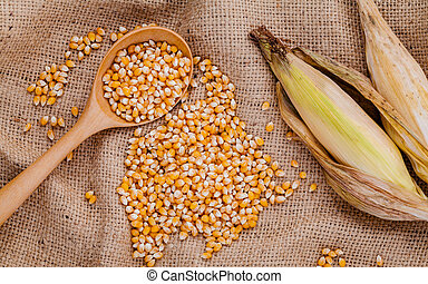 Grains of dried sweet corn in the wooden spoon with sweet...
