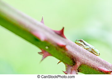 European tree frog - an European tree frog sitting on a...