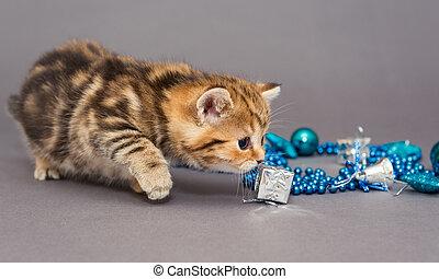 British kitten and Christmas toys - Kitten British marble...