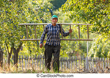 Old farmer with wooden ladder - Old farmer carrying a wooden...