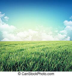 Fresh green sensation - Fresh field of green grass growing...
