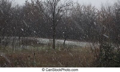 Falling snow in winter - Falling snow in the countryside