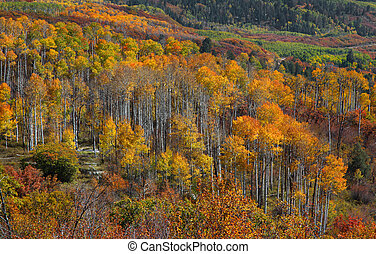 Colorado rocky mountains - Fall foliage in Colorado rocky...