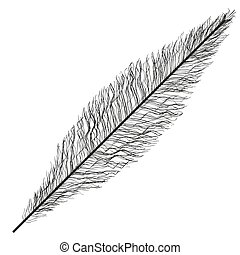 Isolated feather plume design - Feather plume icon. Vintage...