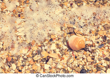 Sea Shells in the Water
