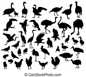 Silhouette of birds and poultry animal, art vector design