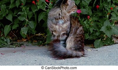 Tabby cat in the street sits calm in front of green bush...