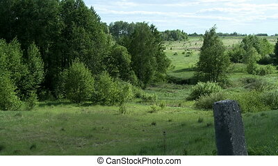 View of beautiful summer scenes - forest and field, close-up