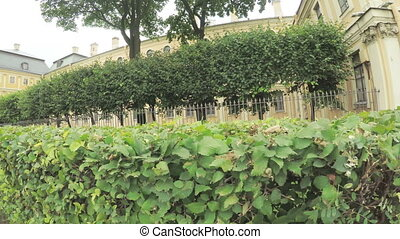Fence and bushes in front of Palace of Menshikov - RUSSIA,...