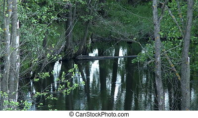 View of trees reflected in smooth surface of pond