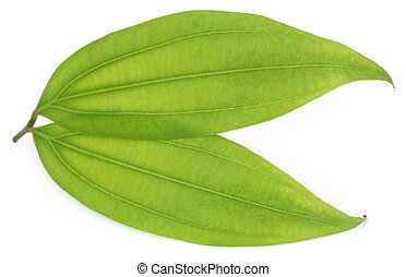 Green bay leaf over white background