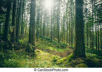 Forest clearing in a green forest in the spring