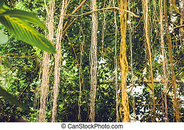 Lianas in a jungle with tropical vegetation in bright...