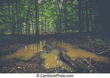 Muddy puddle in a dark forest with green trees