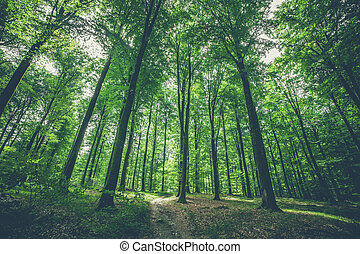 Trees in the forest with green leaves