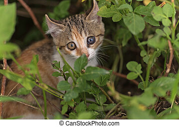 cat hide in the grass - little cat hide in the grass in the...