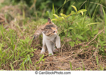 cat walk and play - little cat walk and play on the...