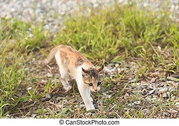 cat in grassland - little cat in the grassland