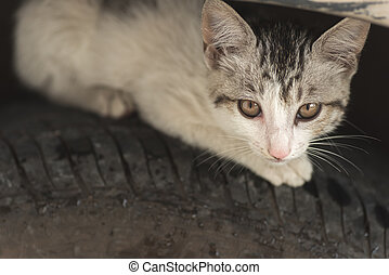 cat hide on the tire - little cat hide on the tire of car