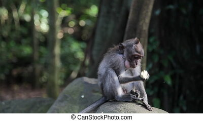 Young monkey sitting on a rock in f