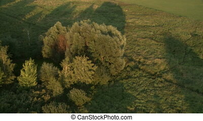 Top view of green fields and trees cast shadows. Summer...