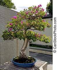 Bonsai flowering tree - Bonsai and Penjing landscape with...