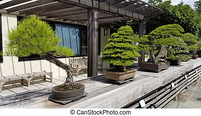 Bonsai miniature evergreen trees - Bonsai and Penjing...