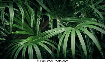 Exotic Plants In The Wind - Tropical ferns moving in the...