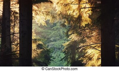 Forest Trees Glow In The Evening - Opening in the forest...