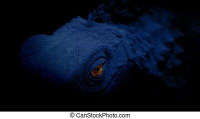 Glowing Reptile Eye In The Dark - Reptile in the shadows...