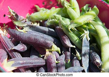 Marrowfat peas and green peas in colander - Marrowfat peas...