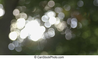 Glimmering Lights - Spots of light coming through the trees...