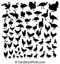 Poultry animal silhouettes