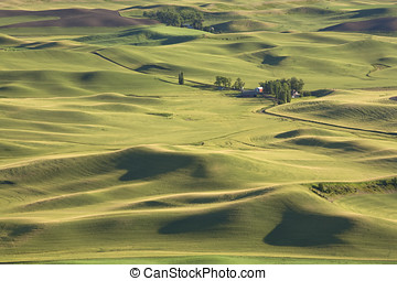 The palouse farmland. - The palouse farmland near Steptoe...
