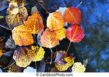 Bright autumn leaves lie in a puddle close-up