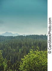 Beautiful landscape of mounatin with light fog in Tatra...
