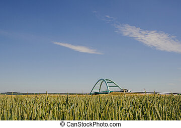 Bridge over wheat field in spring time.