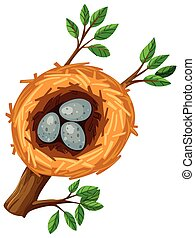 Three eggs in the bird nest illustration