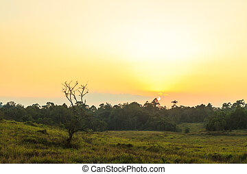 Evening At Khao Yai - Sunset at grassland area of Khao Yai...