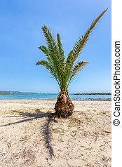 tropical, Palma, árbol, en, arenoso, playa