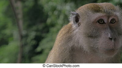 Monkey under the rain - Close-up shot of a monkey sitting...