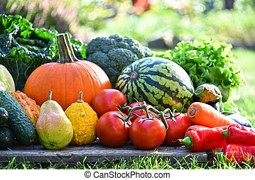 Variety of fresh organic vegetables and fruits in the...