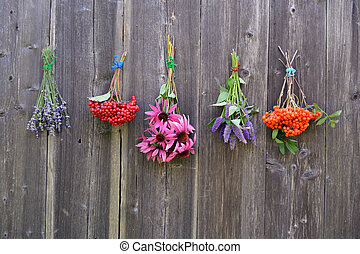Bunches of medical herbs and berries on wall - Bunches of...