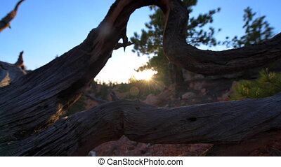 Red Canyon near Bryce at Sunset - Red Canyon at Sunset near...