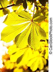 Leaves of chestnut in sunlight. Shallow DOF!