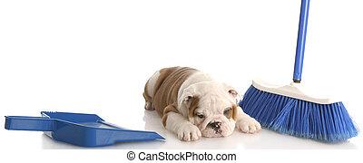 messy puppy