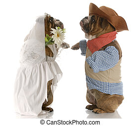 dog bride and groom - english bulldogs standing up dressed...
