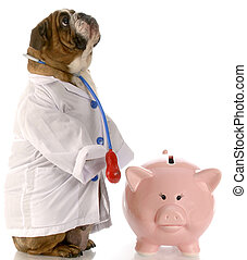expensive vet bill - english bulldog doctor standing beside...