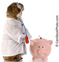 expensive vet bill - english bulldog doctor standing beside...