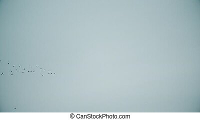 Birds fly in symmetric V-formation in blue sky - Birds fly...